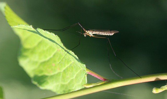 Learn about four important mosquito control tips for homeowners.