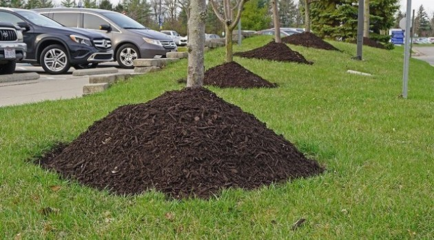 Learn about the negative effects of over-mulching your landscape.