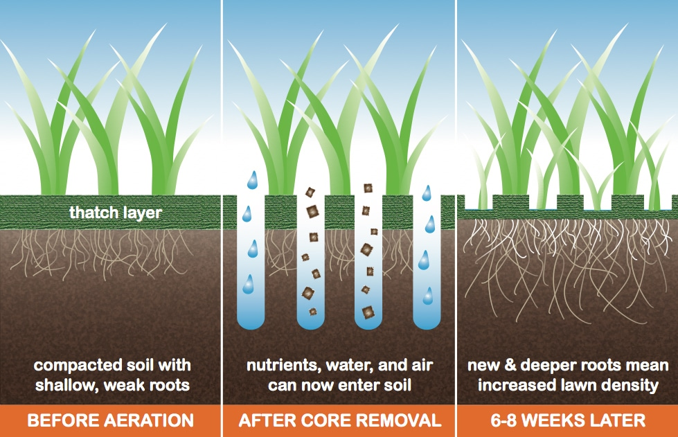 Learn how to know if you should aerate your lawn.