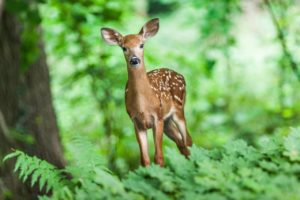 Learn how to keep deer from feeding on your plants.