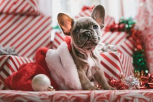 a puppy in a cute holiday photo