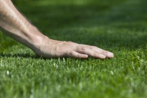 lawn care misconceptions