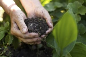 healthy soil and serotonin