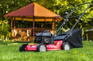 scientific plant service summer lawn care
