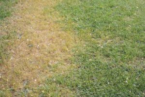 reasons for summer lawn stress