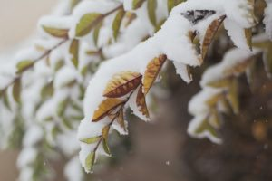 prepare trees and shrubs for winter