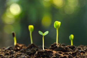 scientific plant service test your garden soil