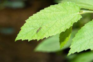 scientific plant service mosquito control