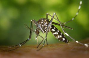scientific plant service Asian Tiger mosquito