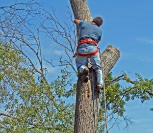 scientific plant service tree inspection